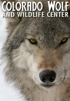 Colorado Wolf & Wildlife Center - Divide, Colorado -- a fun place to visit and support!
