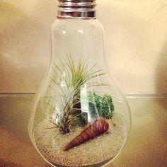 Little lightbulb hanging terrarium