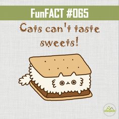#DYK Cats can't taste sweets!