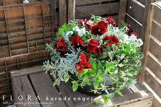 RED パンジー寄せ植え の画像|フローラのガーデニング・園芸作業日記
