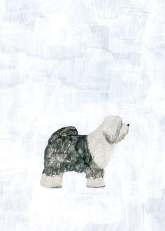 old sheep dog