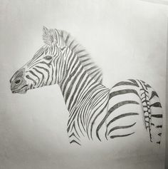 Africa, zebra