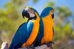 Guacamayo-azuliamarillo-2.jpg (1280×853)