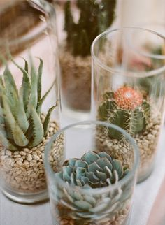 succulents and cactus in glass Succulents In Glass, Types Of Succulents, Planting Succulents, Succulent Centerpieces, Glass Centerpieces, Succulent Terrarium, Terrariums, Glass Cylinder Vases, Clear Vases