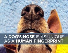 11 Fascinating Facts You Never Knew About Dogs - BuzzFeed Mobile