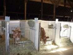 Gorts Calf Pens | Flickr - Photo Cow Shed, Homestead Farm, Farm Barn, Baby Goats, Horse Farms, Horse Love, Livestock, Cattle, Animals And Pets