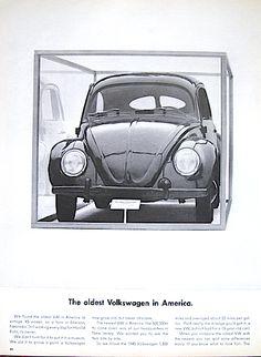 Captured - oldest Beetle in the U.S. #volkswagonvintagecars