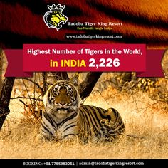 The latest tiger census revealed this year showed that the tiger population in India has elevated from 1,706 in 2011 to 2,226 in 2014, which is a 30 percent spike.