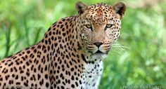 #WowSouthAfrica: What's a Safari Tour Like in Sabi Sands Game Reserve? - Safaribookings Blog