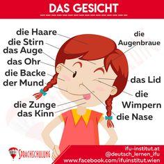 the face - Study German, Learn German, Learn English, German Grammar, German Words, Germany For Kids, German Resources, Deutsch Language, German Language Learning