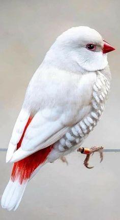 Most Beautiful Birds, Pretty Birds, Animals Beautiful, Cute Animals, Rare Birds, Exotic Birds, Colorful Birds, Loro Animal, Cardinal Birds