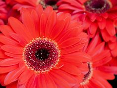 Red Flowers Picture