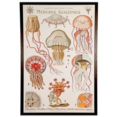 Rare French Teaching Jellyfish Poster, circa 1910   From a unique collection of antique and modern posters at https://www.1stdibs.com/furniture/wall-decorations/posters/