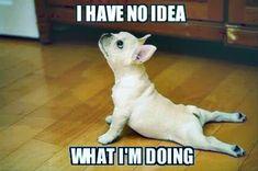 Today Top 45 Funny pics (11:55:50 PM, Monday 28, November 2016 PST) – 45 pics