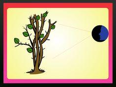 """A buganvília é uma planta florida e trepadeira nativa do Brasil. Esta planta perene ganhou o seu apelido, """"flor-de-papel"""", por conta das suas brácteas de cores variadas que podem ser roxas, vermelhas e laranjas. As vinhas espessas e cheias ..."""