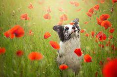 13 hermosas fotos de perritos tomadas por una chica de 19 años