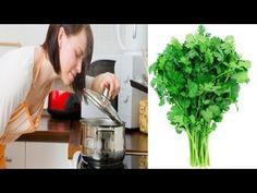 Lo que no sabías del cilantro, cura, riñones, páncreas, hígado y además - YouTube