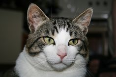 (Picture) - Cat - http://thecatlog.com/picture-cat-143/