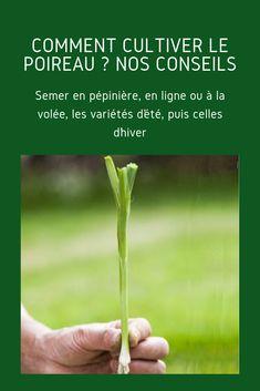 Des rotations à mettre en place aux meilleures variétés et associations au potager : tous nos conseils de jardinage pour réussir à coup sûr la culture du poireau en évitant les maladies et parasites les plus communs.