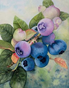 Blueberry Picture watercolor fruit painting by SchaferArtStudio