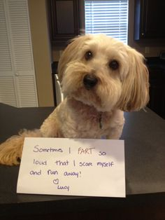 """Sign says: Sometimes I fart so loud that I scare myself and run away! Love, Lucy  (me too lucy!) Lucy will just be walking around and all of a sudden you hear this big fart and she will run away and look at you concerned like """"What was that noise?!"""""""