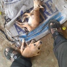 HELP HIKKADUWA STRAYS NEEDS HELP FOR A MASS SPAY - HELP HIKKADUWA STRAYS aims to feed, neuter, vaccinate and relieve sickness or injury of stray cats and dogs in Hikkaduwa , Sri Lanka. After the mass spay our long term goal is to build a shelter.