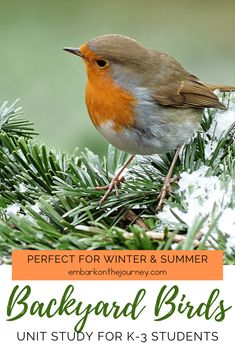 Kids will love studying the birds in their own backyards with this fun backyard birds unit study! It includes books, experiments, and printables! Forest School Activities, Science Activities, Kid Science, Nature Activities, Fun Backyard, Backyard Birds, Special Education Classroom, Early Education, Family Day Care