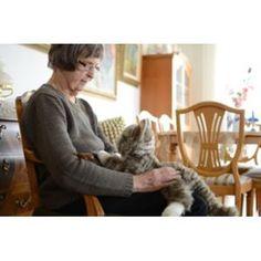 Empatidukker og dyr - Amajo AS Cats, Animals, Dog, Gatos, Kitty Cats, Animaux, Animal, Cat, Animales