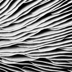 mushroom, by niophe