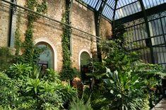 Paris — Serre tropicale du jardin des plantes