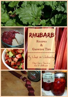 Rhubarb Recipes and Growing Tips -- A My Week on Wednesday Post from Once Upon a Time in a Bed of Wildflowers