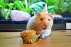 """just so happens my sister is up with her lovely DSLR so we had a mini party for the little now-middle-aged man's birthday. """"whose birthday? Themed Birthday Cakes, Man Birthday, Themed Cakes, Birthday Party Themes, Fondant Animals, Happy 1st Birthdays, Cute Animals, Pictures, Fika"""