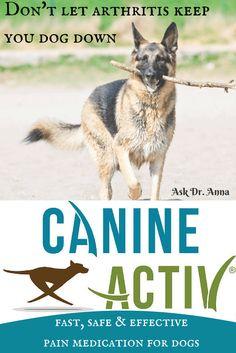 Best Option For Dog Arthritis