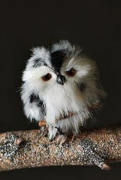 ~~Little owl~~