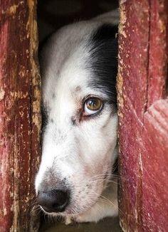 . #animalhearted
