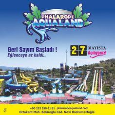 Phalarope Aqualand - Google+