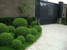 Garden design, duplicate the simple pin suggestion reference 2074284783 here. Front Gardens, Small Gardens, Outdoor Gardens, Boxwood Garden, Topiary Garden, Topiaries, Boxwood Topiary, Modern Landscaping, Front Yard Landscaping