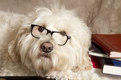 Back to School Blues: Coping with Pet Depression