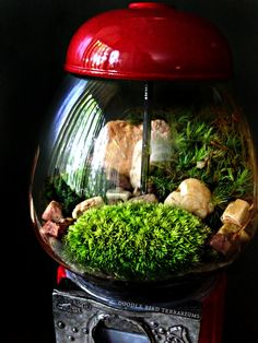 Upcycled gumball machine now houses fresh moss in this converted terrarium.