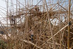 5,000 Arms to Hold You: Climb Mike and Doug Starns Largest Bamboo Construction Ever at the Israel Museum