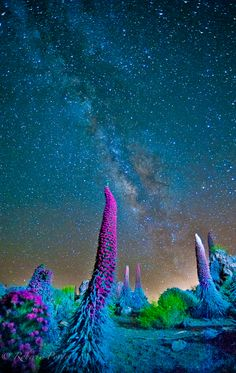 milky way over tajinaste Teide National Park  Spain