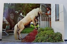 Virginia-VA-Chincoteague-Cloudy-The-Pony-Postcard-Old-Vintage-Card-View-Standard