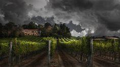***Farmhouse with vineyard by Nicodemo Quaglia (Tuscany, Italy) *
