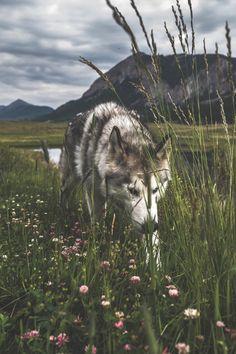 lsleofskye:  Crestted Butte Colorado                                                                                                                                                                                 Plus