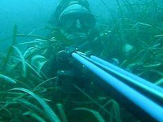#pesca submarina Al acecho de la presa esperando pacientemente a su momento ;) #fishingsub