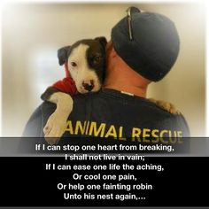 I dream of a day when animal abuse and neglect is a felony