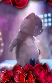 Merry Christmas Gif, Merry Christmas Pictures, Christmas Scenes, Good Morning Funny Pictures, Cute Cartoon Pictures, Dancing Animals, Dancing Cat, Good Night Gif, Good Night Image