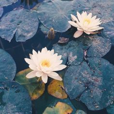 Explore amazing art and photography and share your own visual inspiration! Water Flowers, Flowers Nature, Lotus Flowers, Nature Aesthetic, No Rain, We Are The World, Parcs, Funny Art, Aesthetic Wallpapers