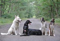 Sigi, Tara, Mia, Linda and Nika