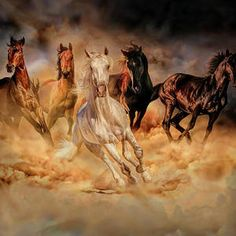 Herd of horses in pastel by Lilia D Drawing Techniques, Catwoman, Beautiful Horses, Archery, Animal Photography, Digital Art, Sketches, Pastel, Donkeys